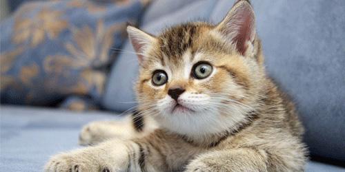 Кошки это рак если у кошки висит живот